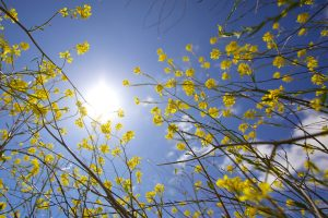 Does Vitamin D Supplementation Aid With Weight Loss In Women?